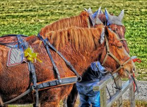 horses sweating to keep cool