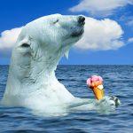ways that animals keep cool, like a polar bear with an ice cream
